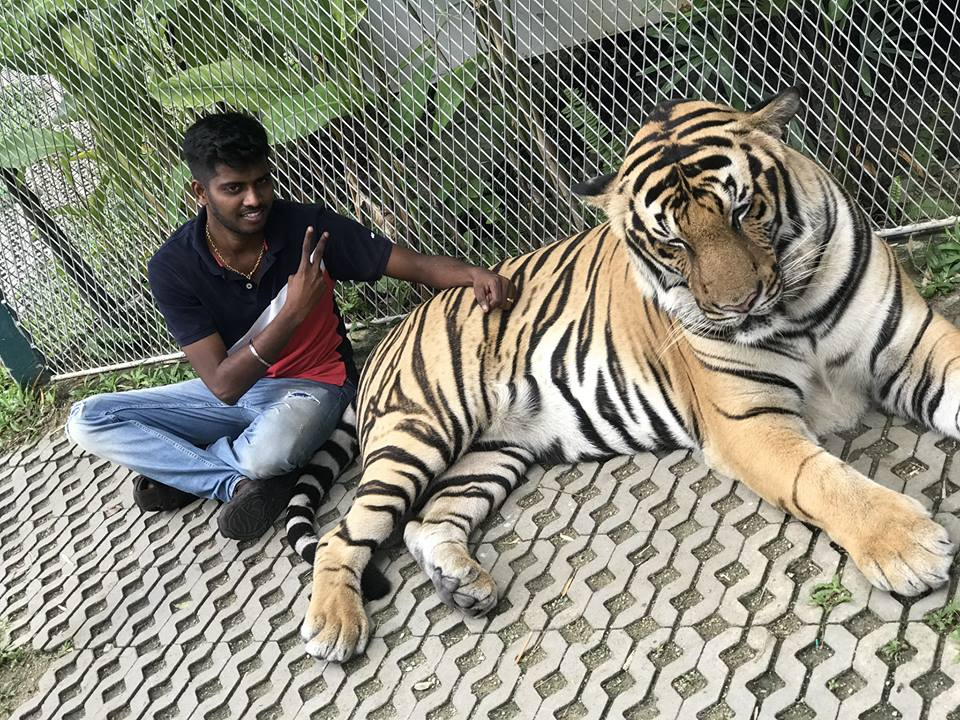 Meet my Tiger friend …Too strong